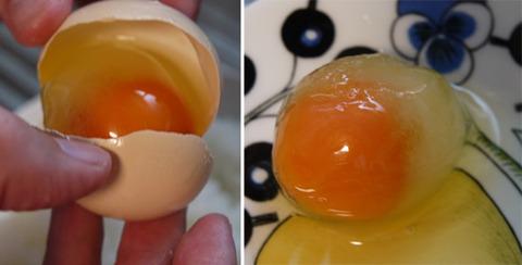 冷凍卵 体験 ためしてガッテン風