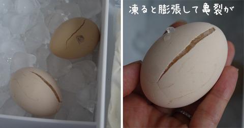冷凍卵 ためしてガッテン風