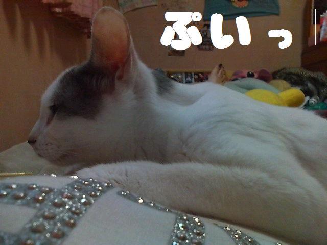 ひーちゃんアップ5