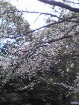 210305梅の花