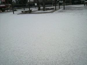 20110130雪2