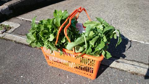 十日町で野菜をもらって帰宅