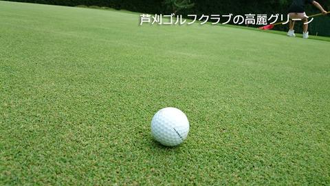 芦刈GCの綺麗な高麗グリーン