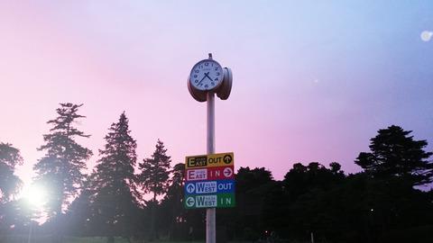紫あやめ36早朝ゴルフ