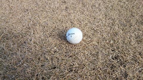 2月の赤羽ゴルフ倶楽部の芝はこんな感じ