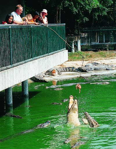 Million Years Stone Park & Pattaya Crocodile Farm 04