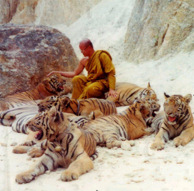 tiger temple 2
