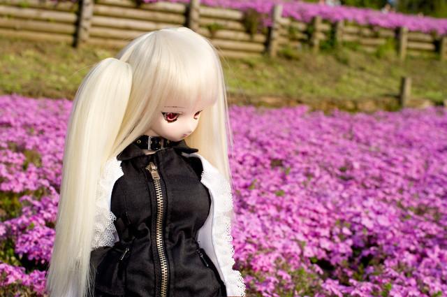 芝桜と詩亜