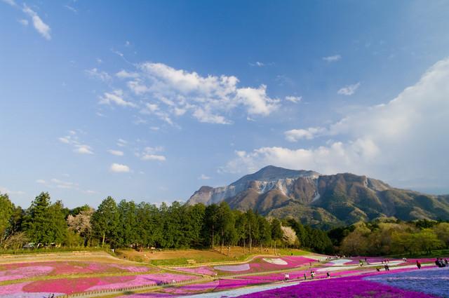芝桜と武甲山全景2