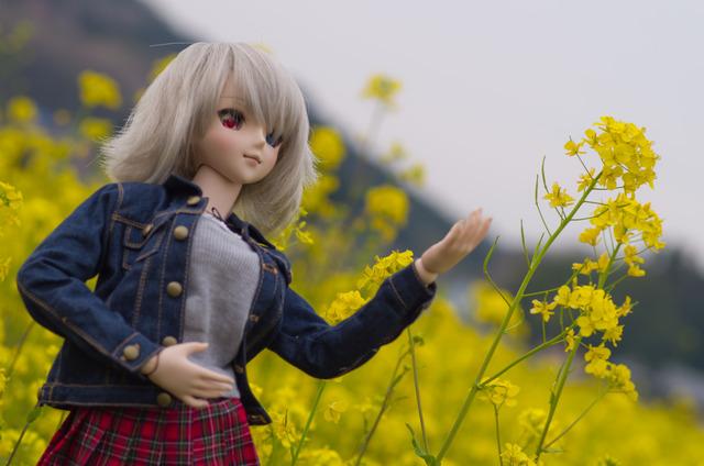 120415 巾着田 桜&菜の花 10
