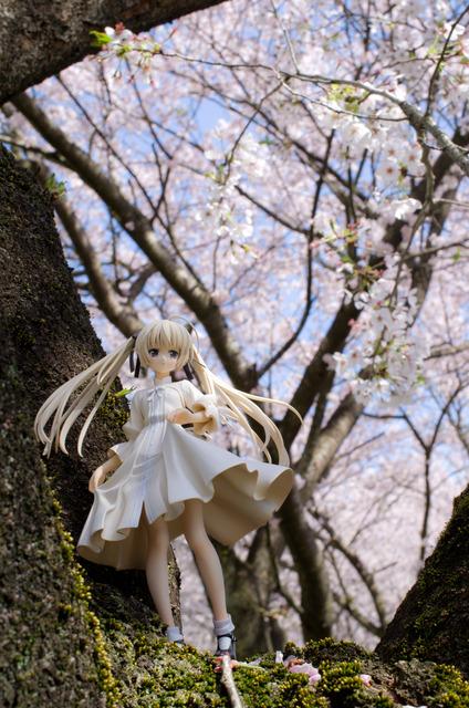 120415 巾着田 桜&菜の花 23