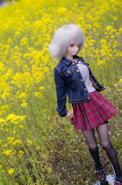 120415 巾着田 桜&菜の花 09