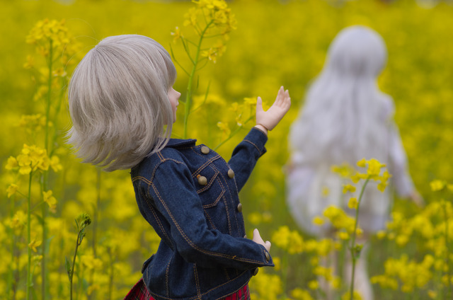 120415 巾着田 桜&菜の花 12