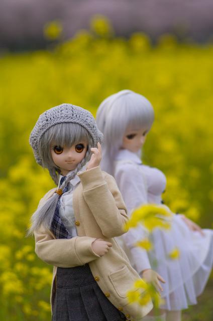 120415 巾着田 桜&菜の花 17