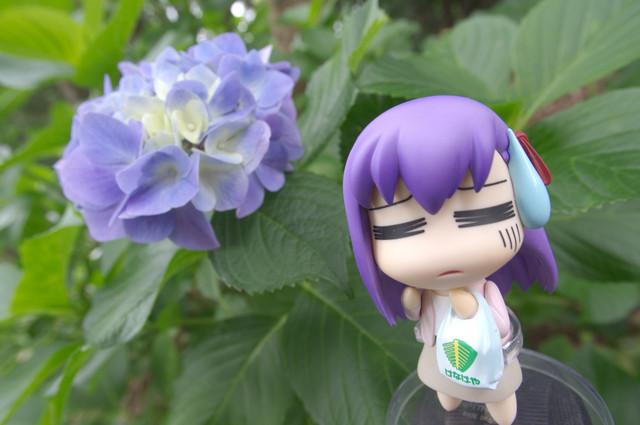 アジサイ撮影オフ へたれ桜1