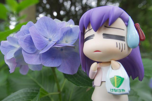 アジサイ撮影オフ へたれ桜2