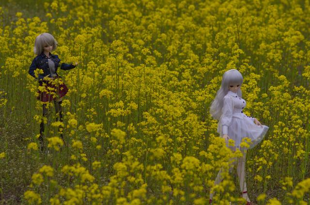 120415 巾着田 桜&菜の花 13