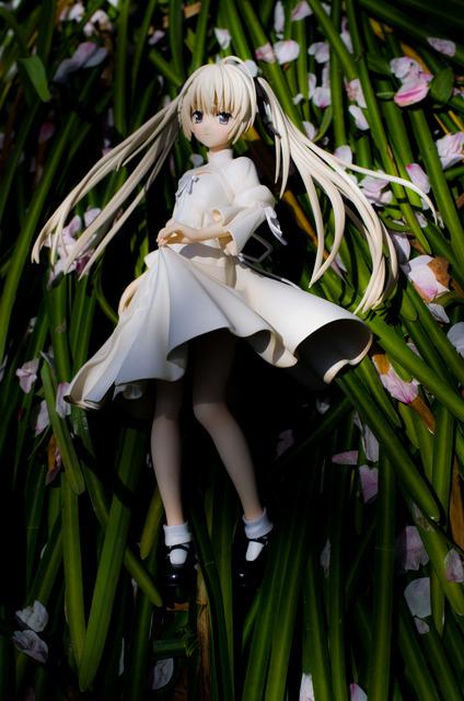 120415 巾着田 桜&菜の花 24