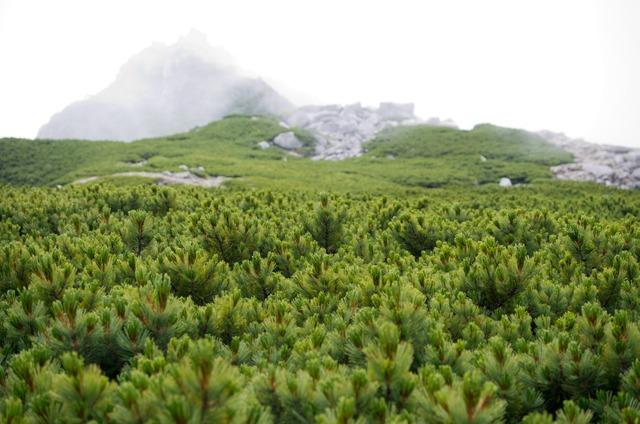 150816木曽駒ヶ岳13