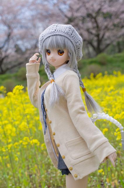 120415 巾着田 桜&菜の花 15