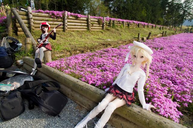 芝桜と舞と唯1