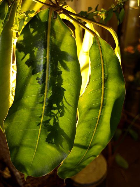 光と植物の芸術