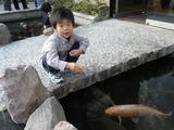 鯉と戯れる