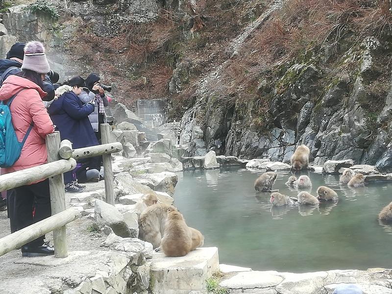 外国人向け観光ガイドその①地獄谷の猿