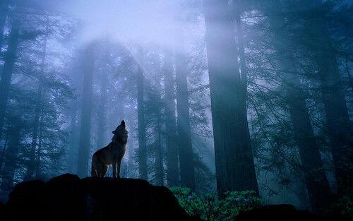 [Tips] 最近話題の『人狼ゲーム』を英語で言うと? 英語の古語が関係します