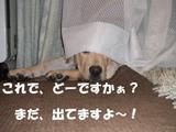 かくれんぼ2