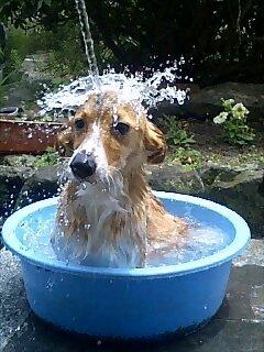 幼女が全裸で水浴び : はさみおじさんのブログ