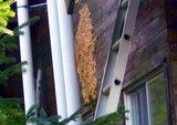 赤蜂の巣2