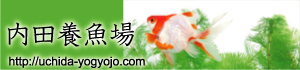 banner_ucchi