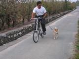 小春自転車引き
