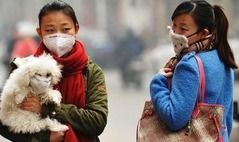 北京的狗口罩