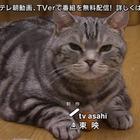 警視庁・捜査一課長 スペシャル[解][字]1.mpg_007277536