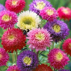 flower_img_10