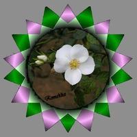 白バラ背景グレイ