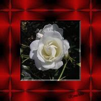 飾りタイル完成白いバラ