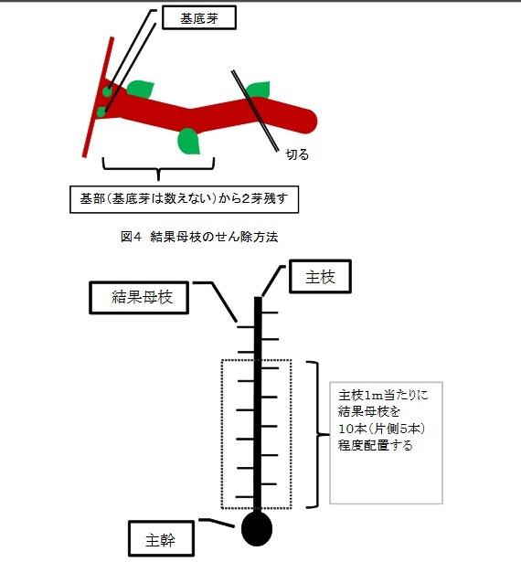 技術-園芸栽培-果樹(高 - 69599 pdf(1)