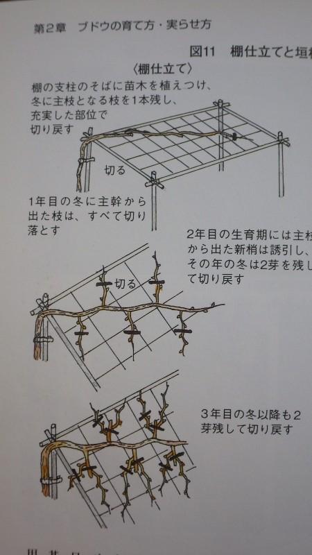 RIMG6968 (450x800)