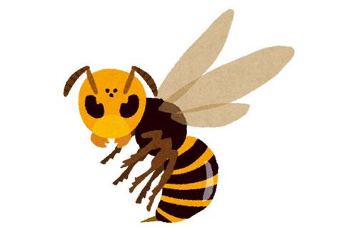 【ヤバイ】日本最強の蜂『オオスズメバチ』ついにアメリカ上陸!国内で初めて巣を発見