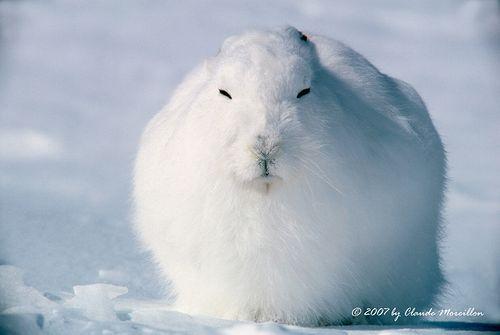 rabbit_ball_02
