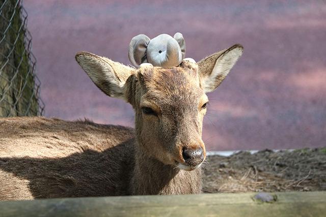 lost-toy-elephant-travels-around-world-photoshop-battle-16