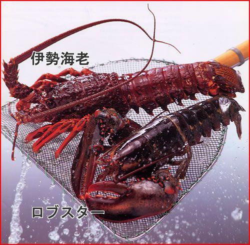 info-lobster-iseebi-img1