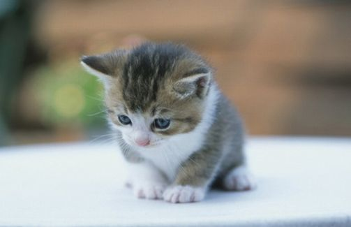【神対応】あるボードゲームの「家の猫ちゃんに配慮した素敵すぎるパッケージ」に愛猫家から大絶賛が殺到! 「これは天才の仕事」