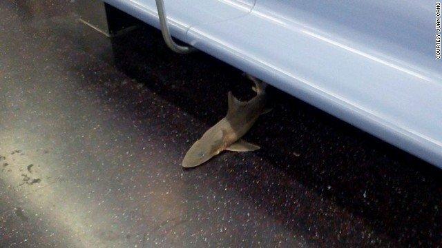 subway-shark-story-top