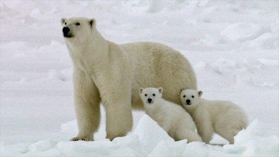 polarbear05-560x315