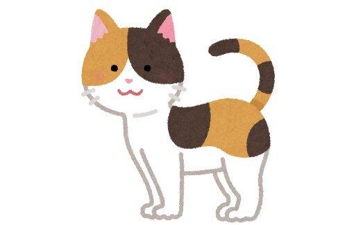新型コロナの影響で、ペットをローンで購入する人が増加 → 36回ローンで購入された猫は悲しい結末に…