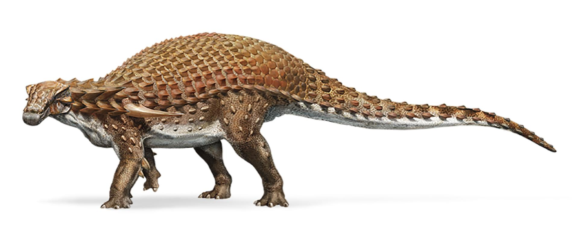 Nodosaur_silo_FLAT_3_IPAD.adapt.1900.1.jpg